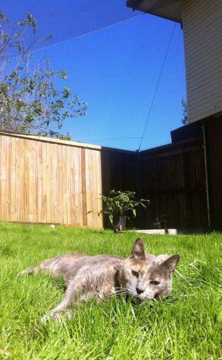 possum-outside.jpg